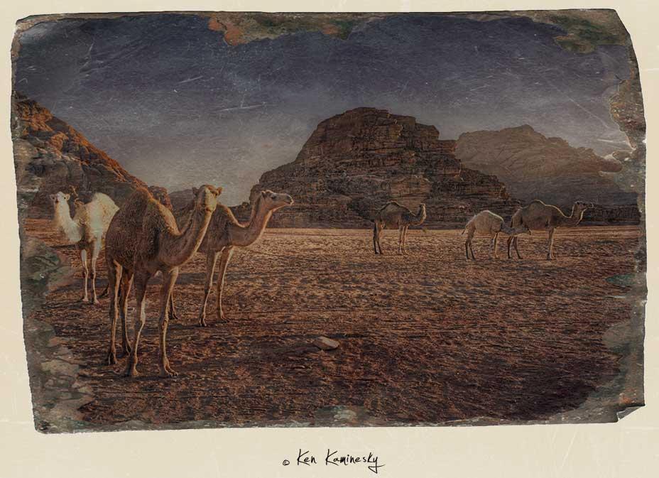 Camels in the Wadi Rum desert in Jordan