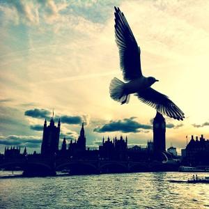 It's a bird! London