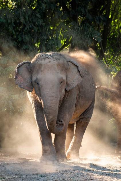 Elephant dust 2048 vert 422x633