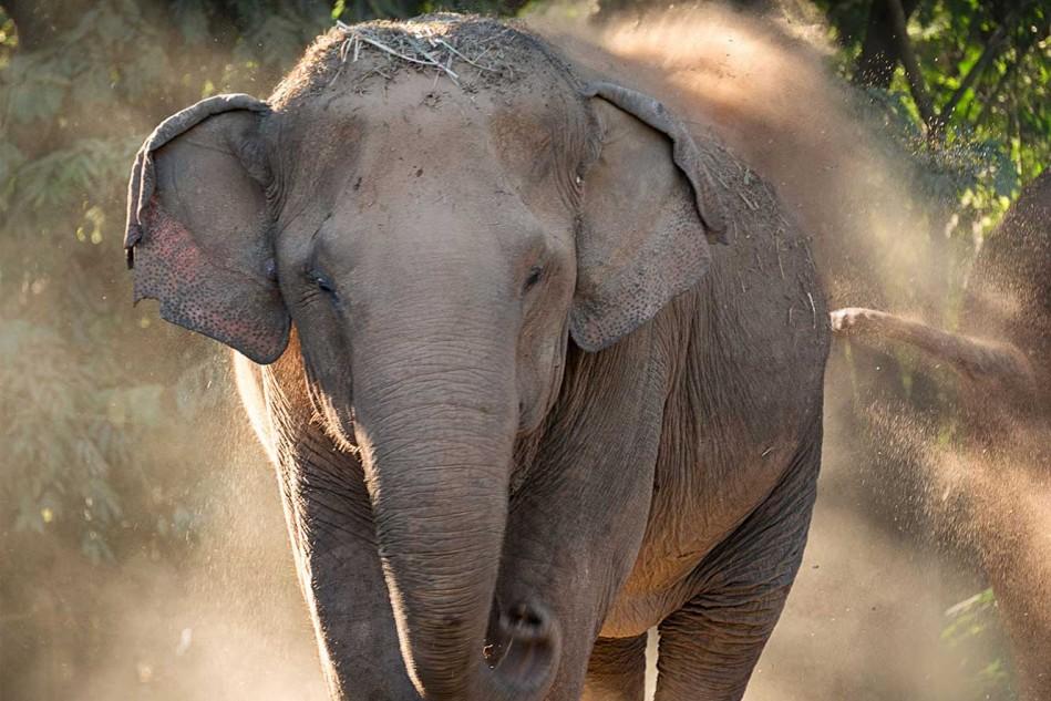 Elephant-Dust-2048-vert