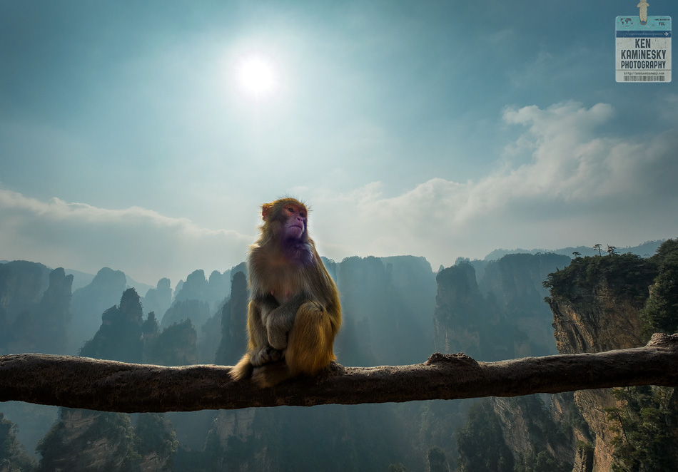 Golden Macaque in Zhangjiajie National Forest Park in China