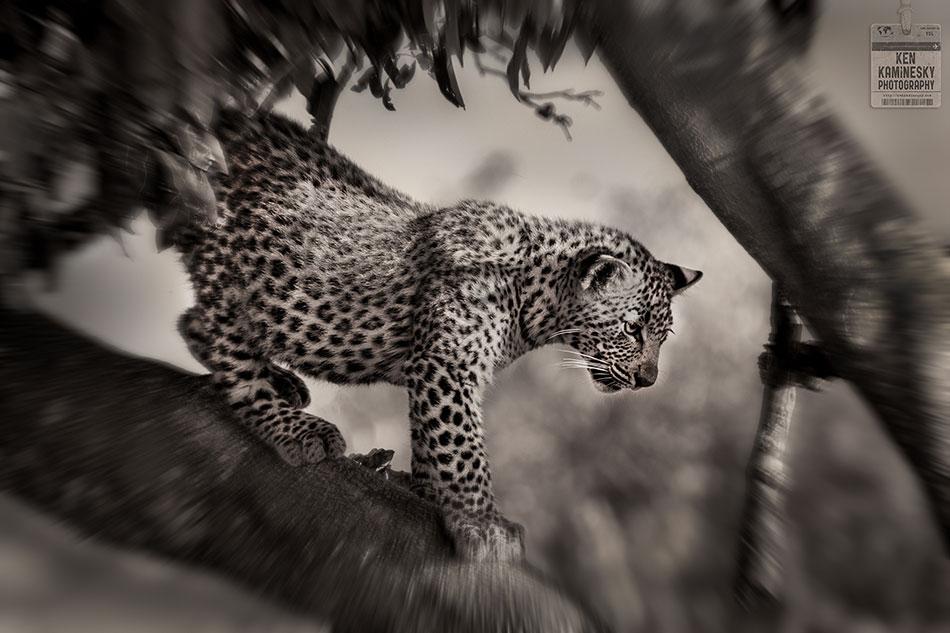 Tanzania Photo Safari – The Trip of a Lifetime
